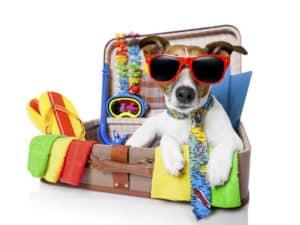 Como viajar en avión con tu mascota