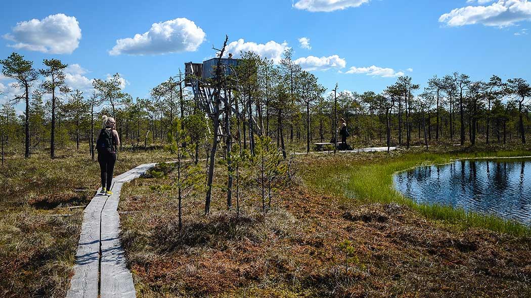Visita Finlandia y sus lagos en verano 4