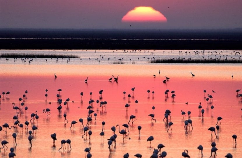 Visitar el Parque Nacional de Doñana. 2