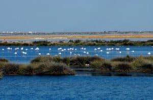 Visitar el Parque Nacional de Doñana.