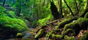 Visitar el Parque Nacional de Garajonay