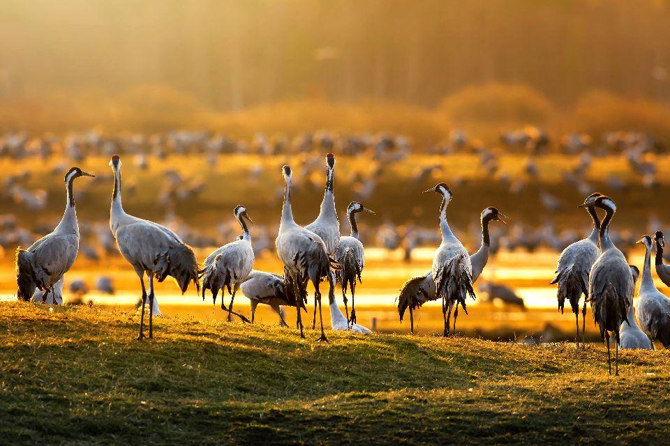 Resultado de imagen de aves tablas de daimiel