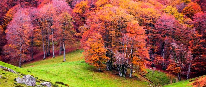 Turismo en otoño: descubre paisajes únicos desde el tren 4