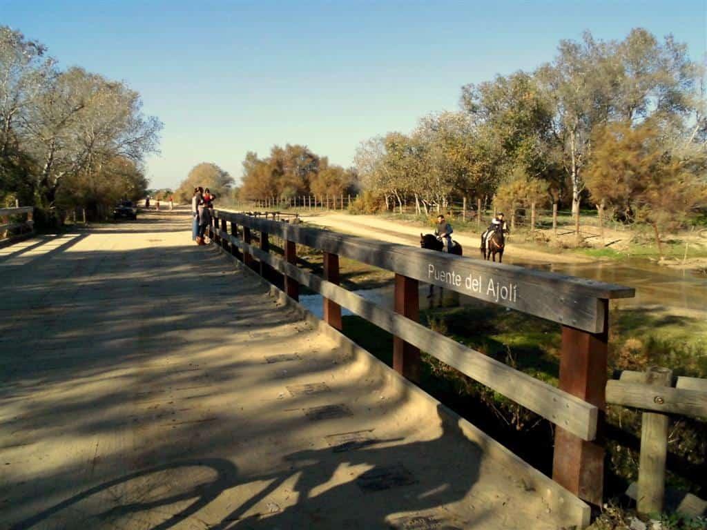 Visitar el Parque Nacional de Doñana. 3