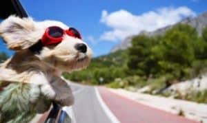 Como viajar en autobús con tu mascota